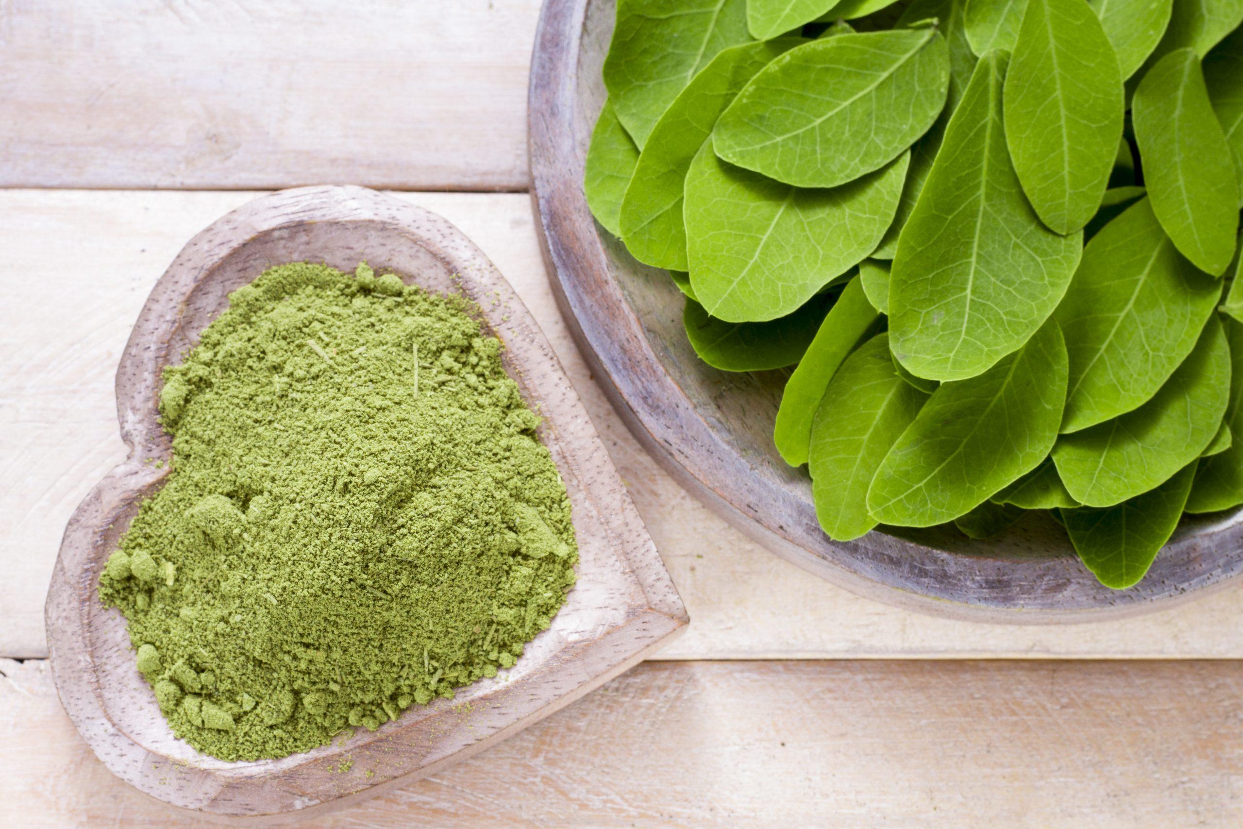 moringa-oleifera-pulver